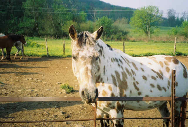 Chunky Gal Stables offers horseback riding through the Nantahala National Forest.