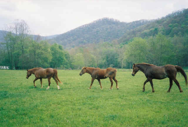 Come see the mountains of Western North Carolina from horseback at Chunky Gal Stables!